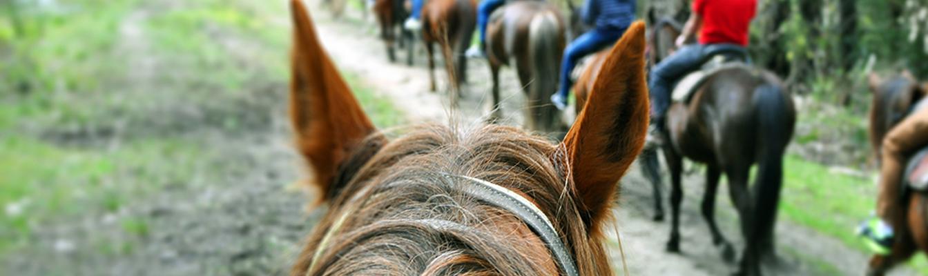 slider-horse-riding